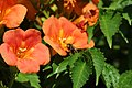 Flowers And Bee (166475537).jpeg
