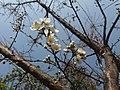 Flowers and bee3.jpg