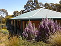 Flowers blooming near dorm at Satyanand Yoga Rocklyn Ashram, Australia.jpg