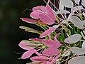 Flowers by puke.jpg