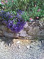 Flowers in the Moat - panoramio.jpg