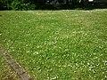 Flowers near Burgholzstraße, Dortmund - panoramio.jpg