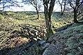 Footbridge in Steep Gully - geograph.org.uk - 1150585.jpg