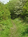 Footpath In Canklow Wood - geograph.org.uk - 799175.jpg