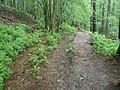 Footpath heading towards Boundless Copse - geograph.org.uk - 818807.jpg