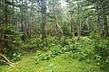 Forest in Yatsugatake 31.jpg