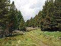 Forest road, Pollie plantation - geograph.org.uk - 1087008.jpg