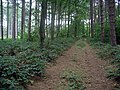 Forest track - geograph.org.uk - 256541.jpg