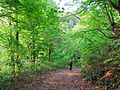 Forest trail (9045469379).jpg