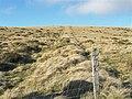 Former field boundary on Pegwn Bach - geograph.org.uk - 1176499.jpg