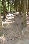 Foxholes - Bois Jacques - Bastogne - 01.jpg