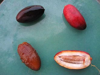 Date palm - Fresh dates, clockwise from top right: crunchy, crunchy opened, soft out of skin, soft.
