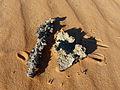 Fulgurites-Adrar mauritanien (1).jpg