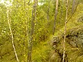 G. Novouralsk, Sverdlovskaya oblast', Russia - panoramio (143).jpg