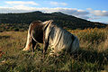 GH Pony.jpg
