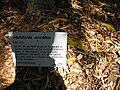 Gardenology.org-IMG 0586 rbgs10dec.jpg
