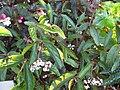 Gardenology.org-IMG 1228 rbgs10dec.jpg