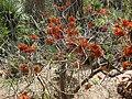 Gardenology.org-IMG 4326 hunt0904.jpg