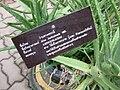 Gardenology.org-IMG 7595 qsbg11mar.jpg