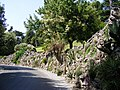 Gardens in Vatican City - Cactaceae - 2.jpg