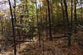 Gatineau Park, October 2018 (12) (31456393498).jpg