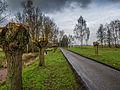 Geknotte wilgen - Steinse Groen - Haastrecht (22160400462).jpg