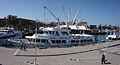 Genoa - harbour.jpg