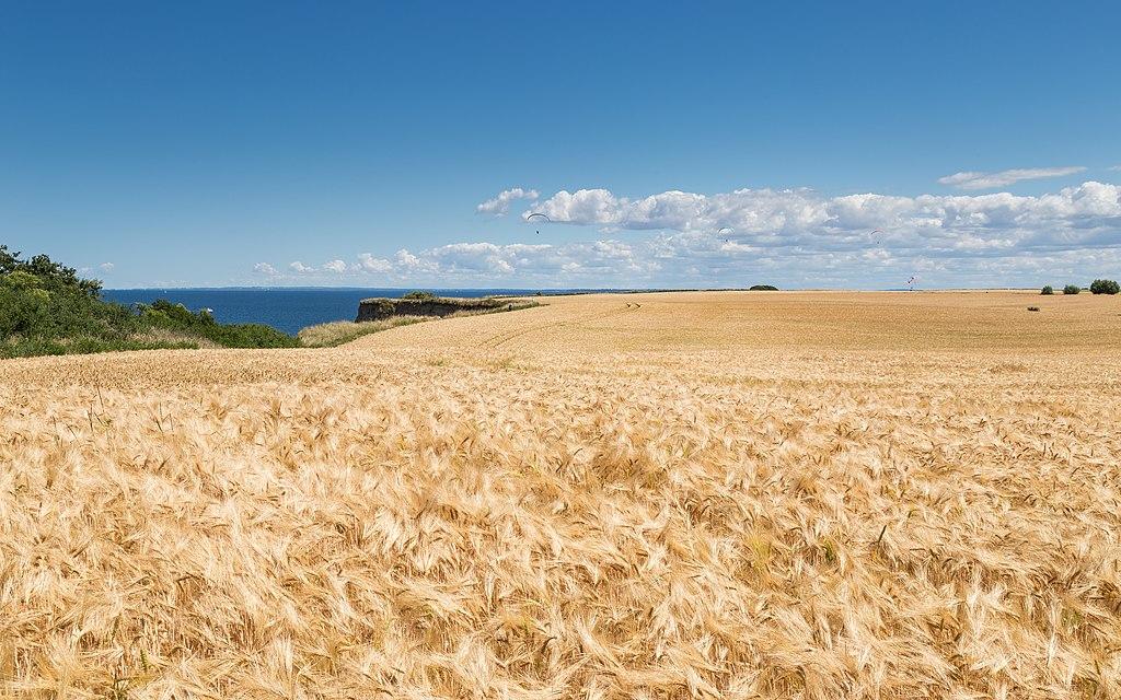 Getreidefelder nahe der Steilküste bei Boltenhagen