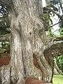 Ghana Aburi Botanical gardens (2).jpg