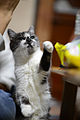 Give me that crisp! (10877301606).jpg