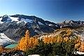 Glacier-Lyman-Tamarack.jpg
