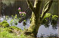Glencoe Lochan. - panoramio (5).jpg
