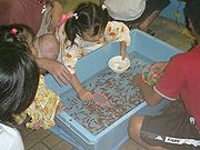 View from above of children gathered around a pale blue rectangular tub filled with many small orange fish swimming in water. A girl at the top of the scene leans over the tub, with a pink scoop in her right hand and a white bowl in her left hand.