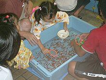 Vista desde arriba de los niños reunidos alrededor de una tina rectangular azul pálido llena de muchos pequeños peces naranjas nadando en el agua.  Una chica en la parte superior de la escena se inclina sobre la bañera, con una bola rosa en su mano derecha y un cuenco blanco en su mano izquierda.