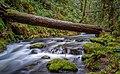 Goldstream Provincial Park, Victoria, Canada (Unsplash).jpg
