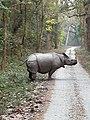 Gorumara-Rhino.jpg