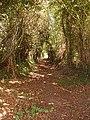Green lane near Rose Lane - geograph.org.uk - 229777.jpg