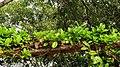 Green leaves arch.jpg
