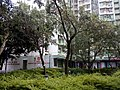 HK TSW 天水圍新市鎮 Tin Shui Wai 天慈邨 Tin Tsz Estate trees Dec 2016 Lnv2.jpg