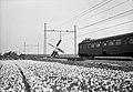 HUA-150969-Gezicht op bloembollenvelden met een molen en een gedeelte van een passerend electrisch treinstel mat 1946 van de NS ter hoogte van Lisse.jpg