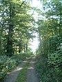 Harbke Forst Im Bärengrund - panoramio.jpg