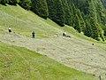 Haymaking, Dischmatal - panoramio.jpg