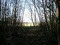 Hayton Wood - geograph.org.uk - 89525.jpg