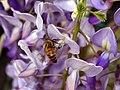 Helios - Bee-tle (by-sa).jpg