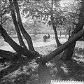 Herfst in Vondelpark, Bestanddeelnr 910-7261.jpg