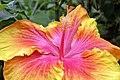 Hibiscus2733.JPG