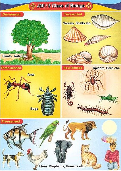 File:Hierarchy of Beings.jpg