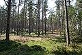 High View Plantation - geograph.org.uk - 205076.jpg