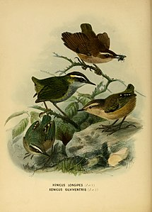 History of the birds of NZ 1st ed p114.jpg