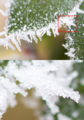 Hoar frost close up.png